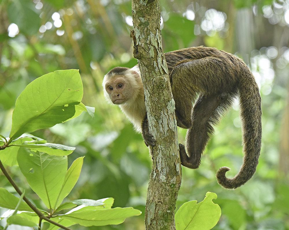 Wildlife-Costa-Rica.jpg